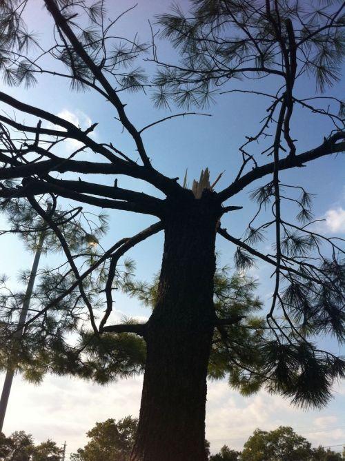 Tree-damage