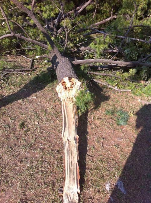 Tree-damage2